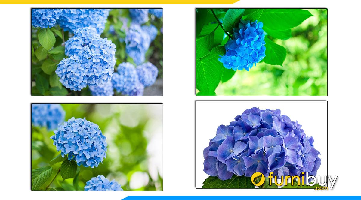 Hình ảnh Tranh hoa cẩm tú cầu màu xanh treo phòng ngủ hợp người mệnh Mộc