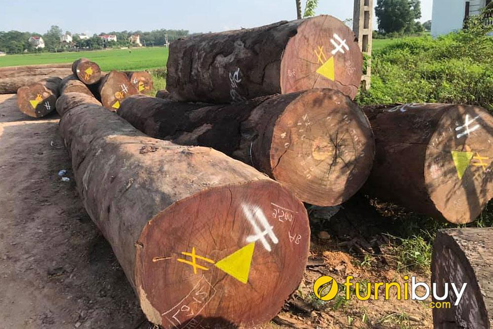 Các loại gỗ lim trên thị trường Việt Nam