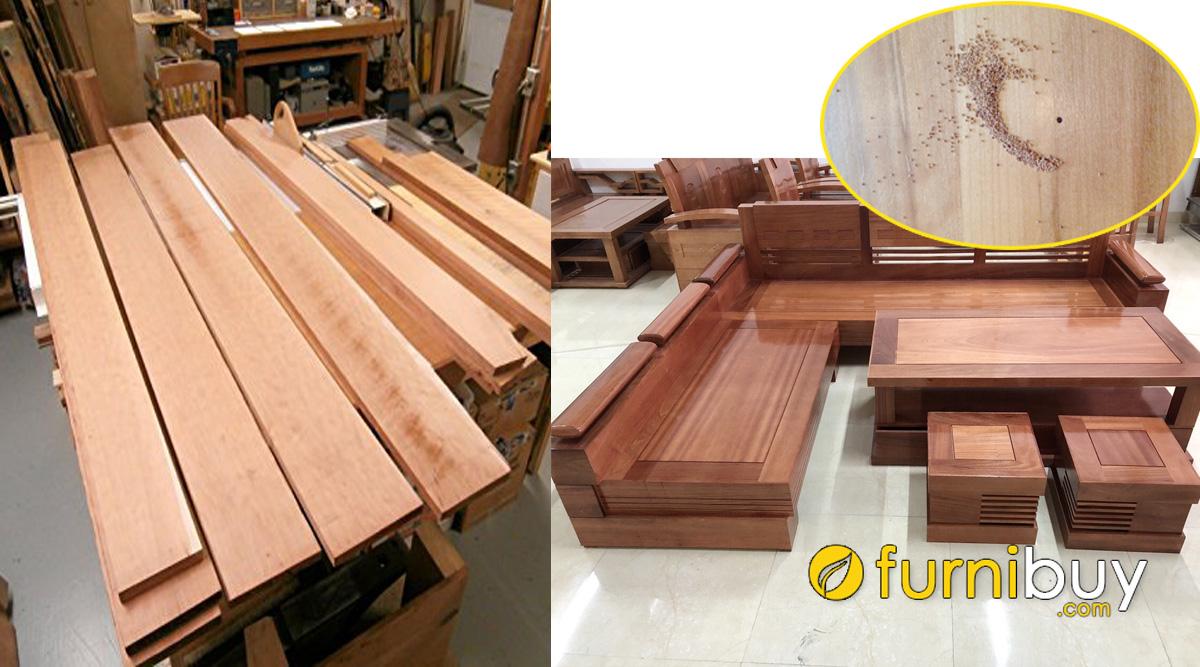 bàn ghế sofa gỗ xoan đào có bị mối mọt hay không