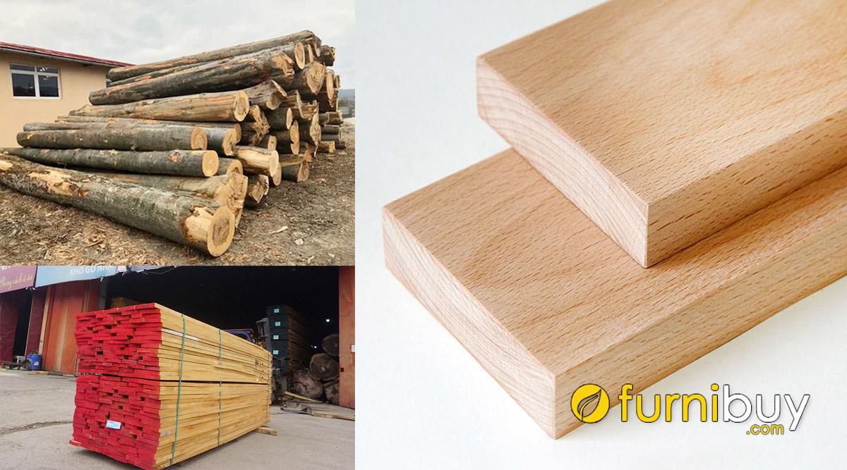 cách nhận biết gỗ dẻ gai gỗ beech đơn giản