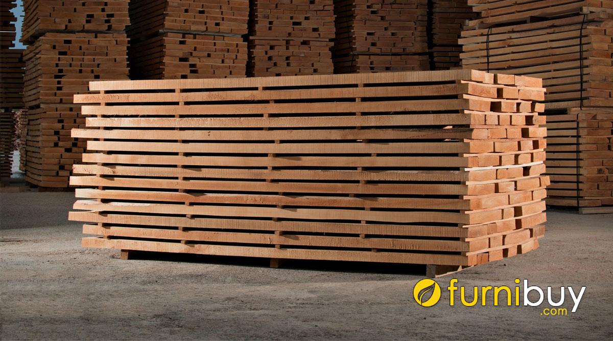 phân loại gỗ dẻ gai có đặc điểm gì
