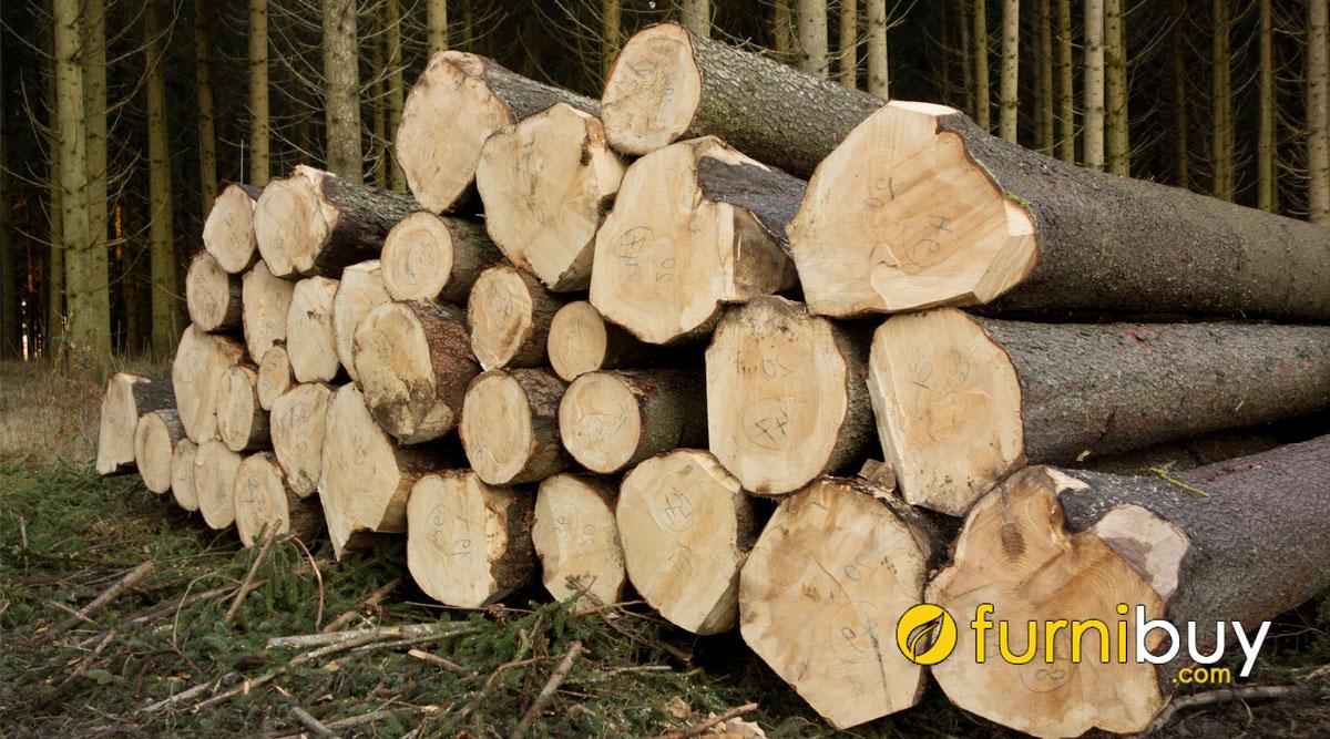 gỗ sồi nga là gì và ứng dụng nội thất