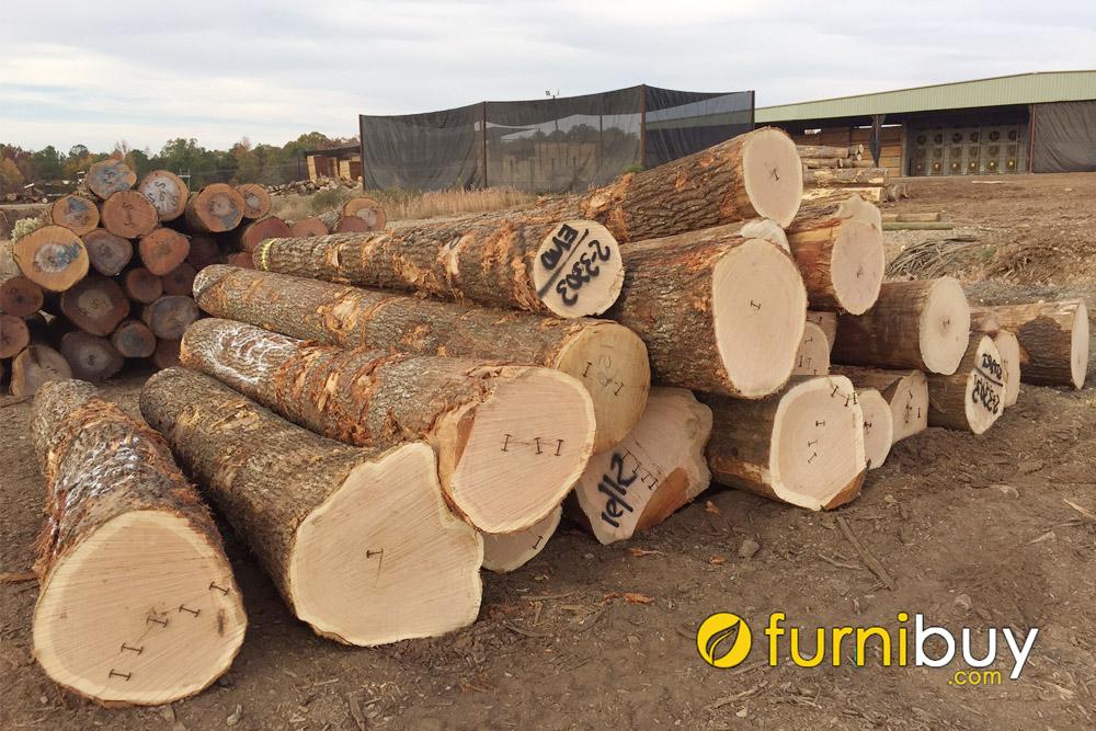 Gỗ sồi nhập khẩu được đánh giá chất lượng tốt hơn gỗ sồi Việt Nam